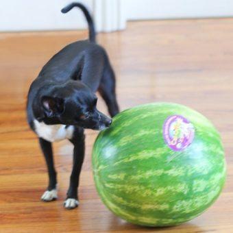Batman vs. the Watermelon