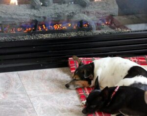 dogs-fire_thumb