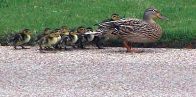 duckies4