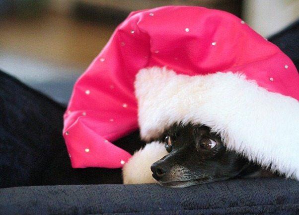 santa-paws_thumb
